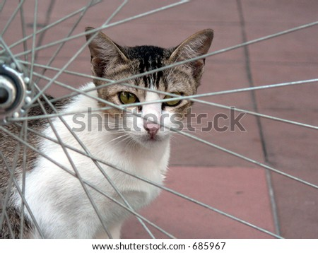 Cat looking through bicycle