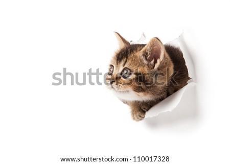 cat looking up in paper.