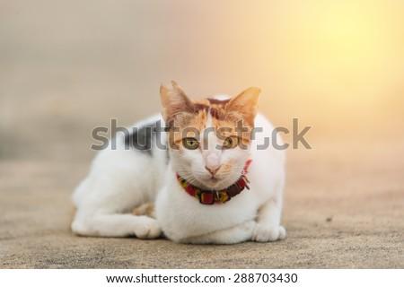 Cat looking. vintage filter.