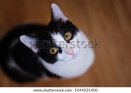 cat looks at the camera with...