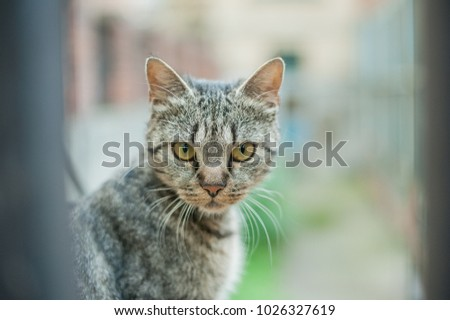 Cat looks into camera #1026327619