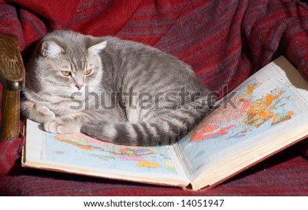 Cat looks on a map
