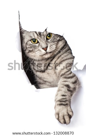 Cat looks through a hole in paper