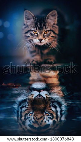 Cat Looks Tiger in it's Shadow Stock photo ©