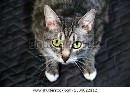 Cat looks you in the eye with a dumb question. Request a pet in the big green eyes. A hungry cat asking for food in humans. Homeless cat asks to pick him up from the shelter