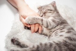 Cat love By the hand grip at hand. happy cat lovely comfortable sleeping by the woman stroking hand grip at . love to animals concept .