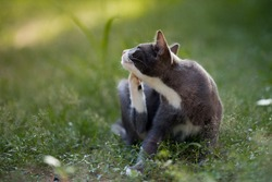 cat lying down on the grass and scratching fleas