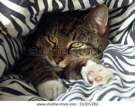 Cat lying in and under a blanket.
