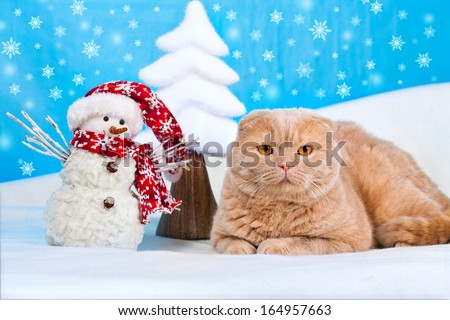Cat lying near snowman at Christmas background