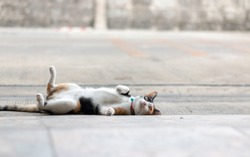 Cat lying on back on the floor with street and old wall background. Relax and comfortable concept. Selective focus.