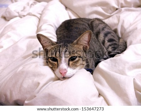 Cat lying on bed cover at home.