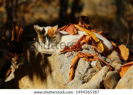 cat lying on the autumn foliage #1494365387