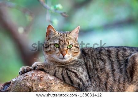 Cat lying on tree branch