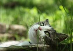 Cat lying outdoors in the grass on a lovely summer day