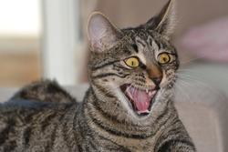 Cat making a strange grimace