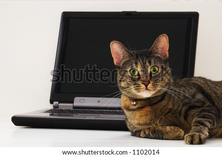 Cat modeling for computer