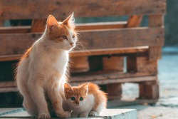 Cat mom with her kitten. Concept of motherhood, child care and love. Homeless mother with her baby on street. Frightened little white and red kitten cuddles to cat
