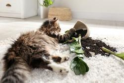 Cat near overturned houseplant on light carpet at home