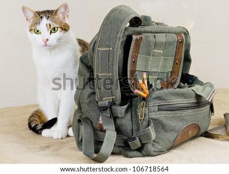 cat near the bag