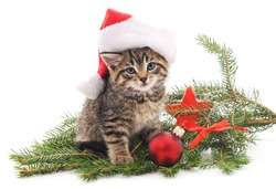 Cat near the Christmas tree isolated on a white background.