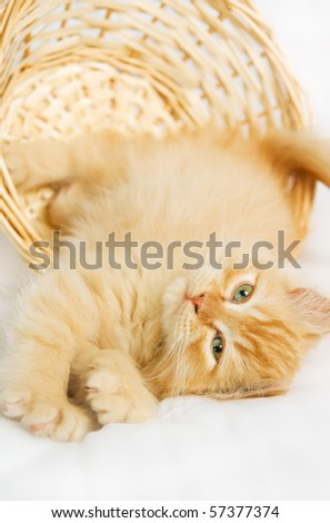 cat nice play