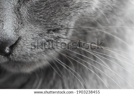 cat nose whiskers background gray  Stock photo ©
