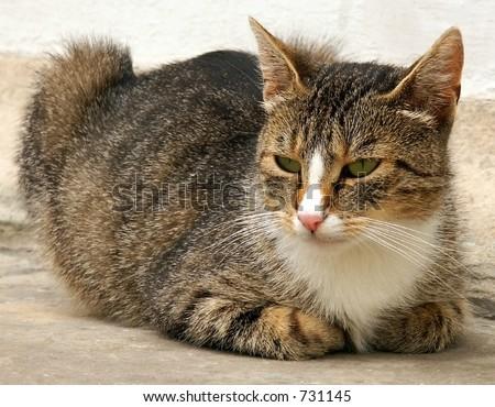 Cat observer.