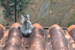 Cat observing the backyard from the rooftop. Old fashioned Spanish style roof tiles, made of clay