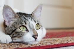 Cat of green eyes looking at horizon