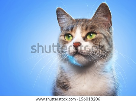 Cat on a blue background #156018206