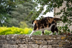 Cat on a brick wall in a small village in Cotswold.