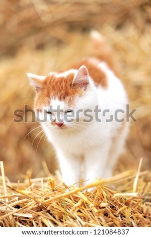 Cat on a straw