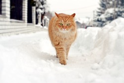 Cat on a winter walk