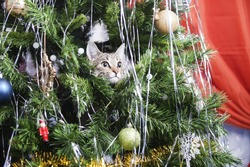 Cat on Christmas tree. Naughty cute kitten. New Year