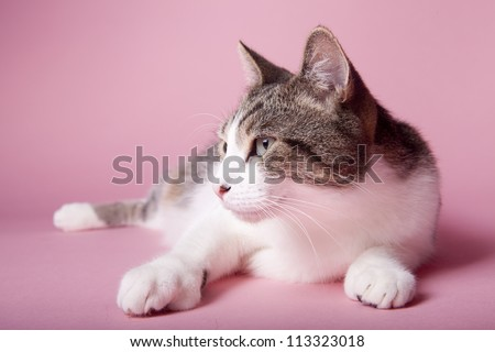 cat on colored background