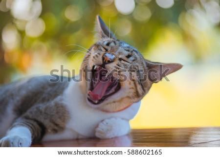 Cat on green bokeh background #588602165
