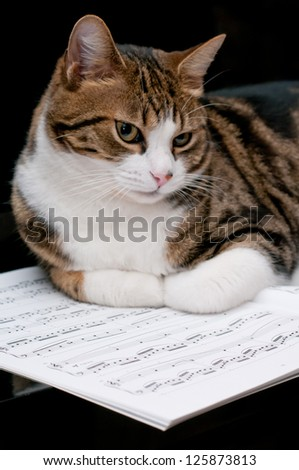 Cat on musical score