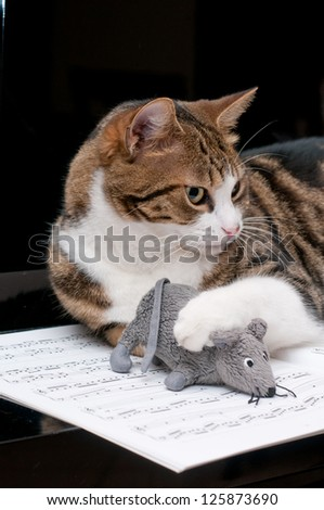 Cat on musical score with mouse