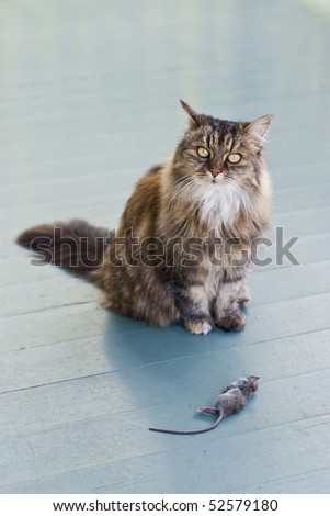 Cat on patio presenting dead mouse