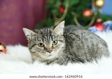 Cat on plaid on Christmas tree background