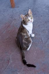 Cat on Samos