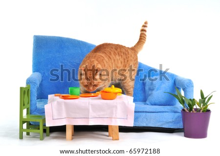 Cat on sofa grabbing food from table