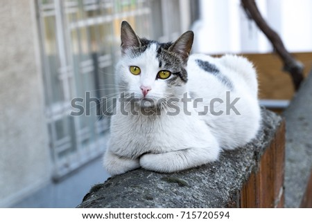 cat on street and sitting on a wall #715720594