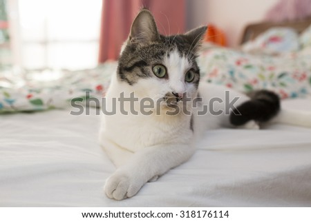 Cat on the bed #318176114