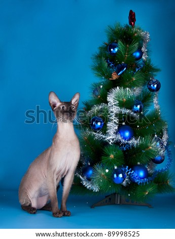 Cat on the blue background