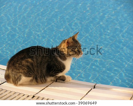 Cat on the edge of swimming pool