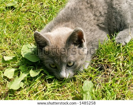 cat on the green - stock photo