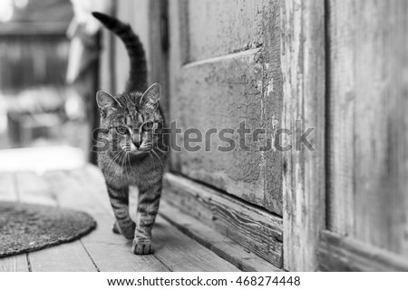Cat on the porch of rural house, black and white photo.