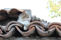 Cat on the roof in Berat castle in Albania
