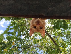 cat on the roof upside down